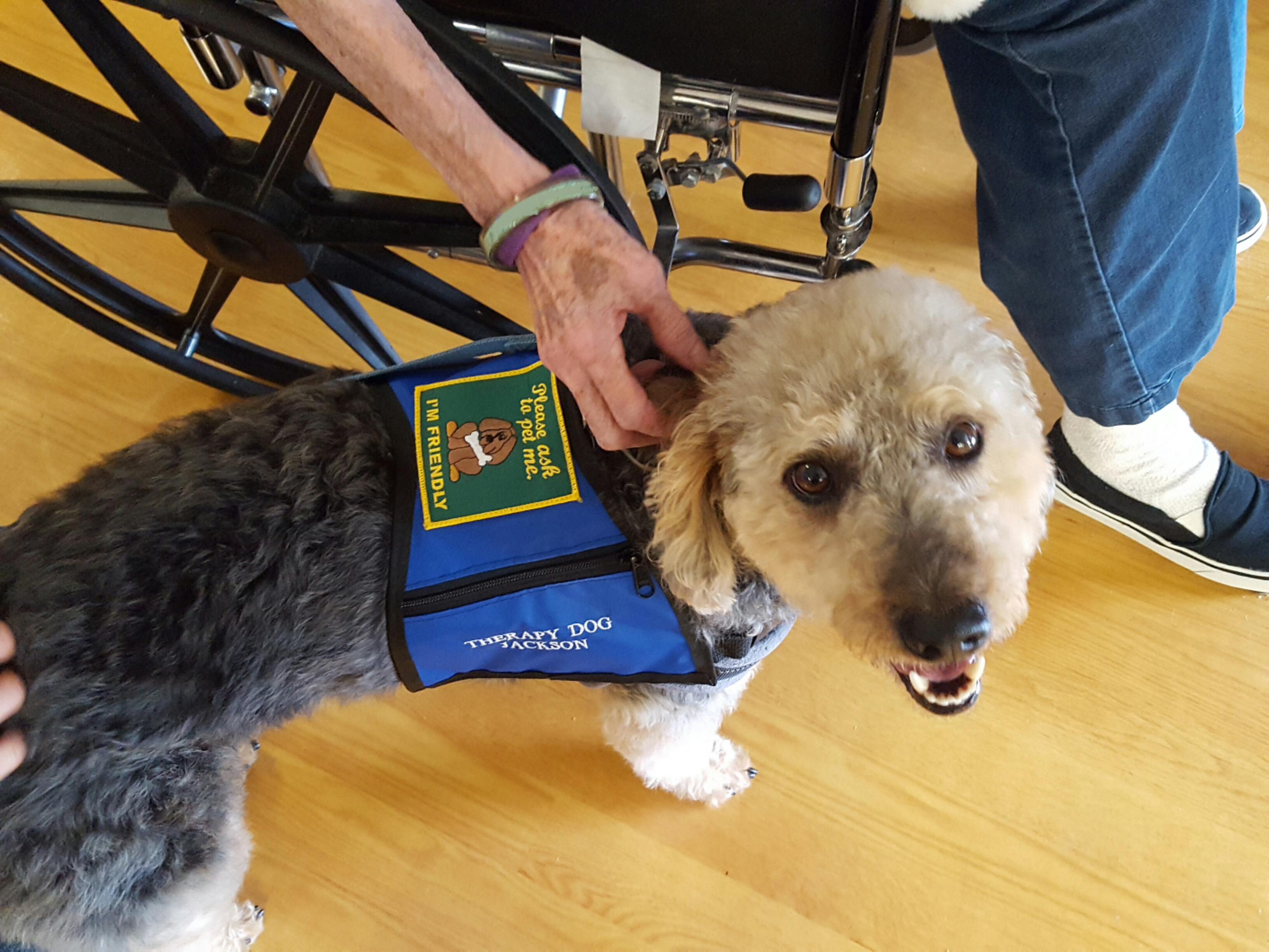 Therapy dog Jackson at work